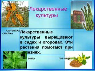 Лекарственные культуры выращивают в садах и огородах. Эти растения помогают