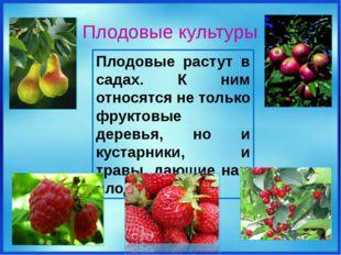 Плодовые растут в садах. К ним относятся не только фруктовые деревья, но и к