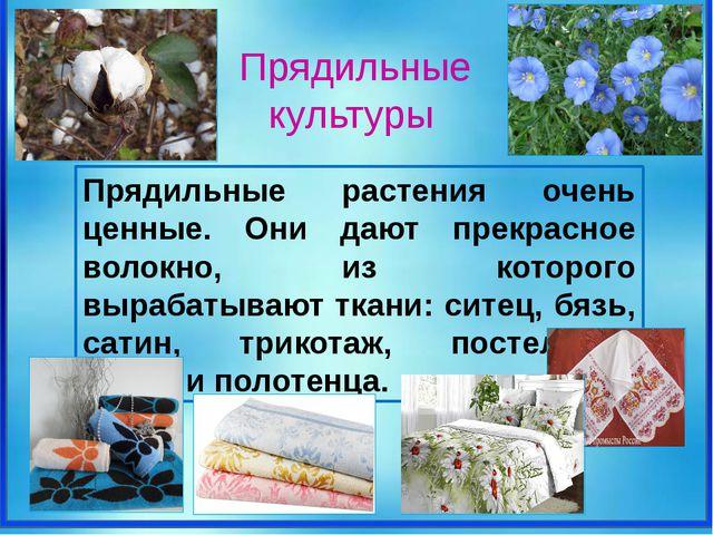 Прядильные растения очень ценные. Они дают прекрасное волокно, из которого в...