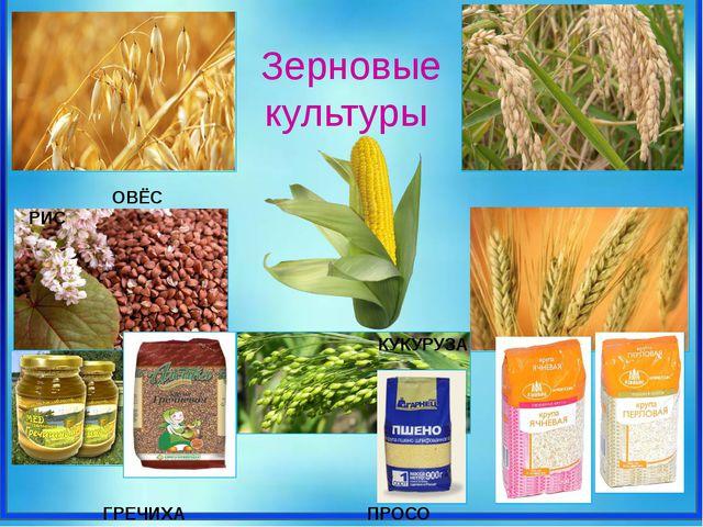 Зерновые культуры ОВЁС РИС КУКУРУЗА ГРЕЧИХА ПРОСО ЯЧМЕНЬ