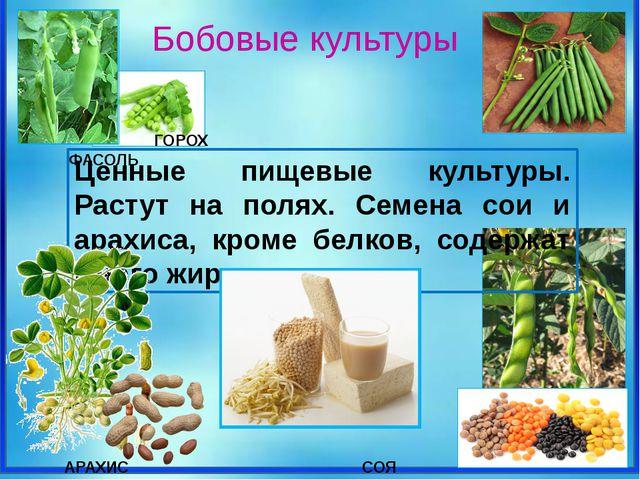 Ценные пищевые культуры. Растут на полях. Семена сои и арахиса, кроме белков...