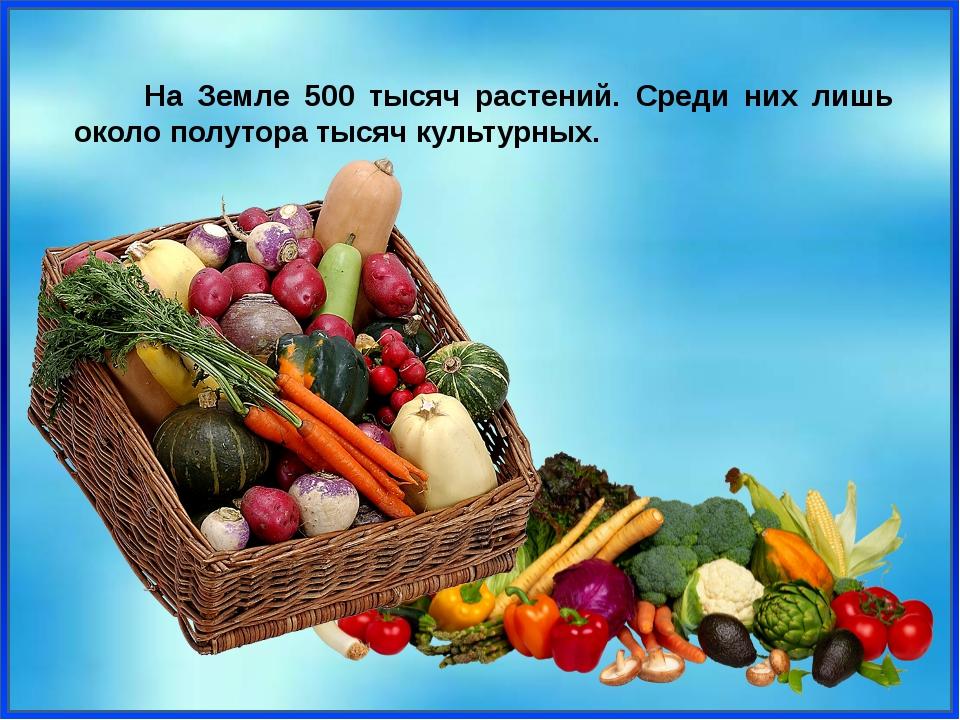 На Земле 500 тысяч растений. Среди них лишь около полутора тысяч культурных.