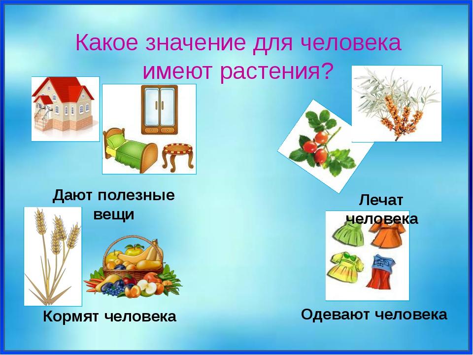 Какое значение для человека имеют растения? Дают полезные вещи Кормят челове...
