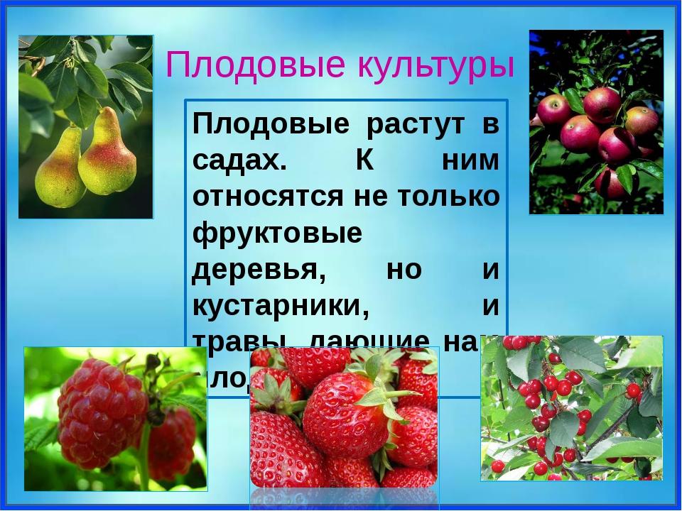 Плодовые растут в садах. К ним относятся не только фруктовые деревья, но и к...