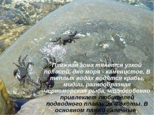 Пляжная зона тянется узкой полосой, дно моря - каменистое. В теплых водах во