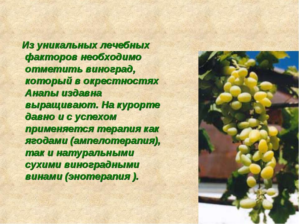 Из уникальных лечебных факторов необходимо отметить виноград, который в окре...