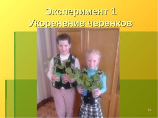 * Эксперимент 1 Укоренение черенков