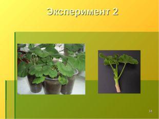 Эксперимент 2 *