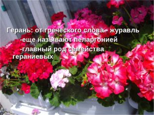 * Герань: от греческого слова - журавль -еще называют пеларгонией -главный ро