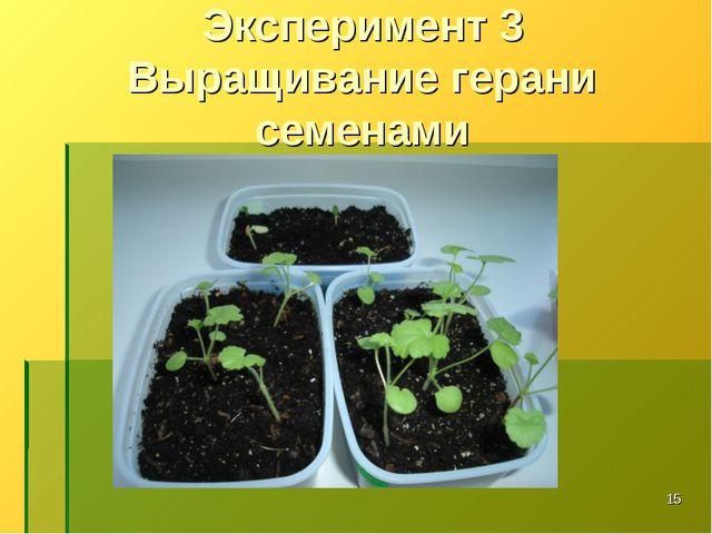 Эксперимент 3 Выращивание герани семенами *