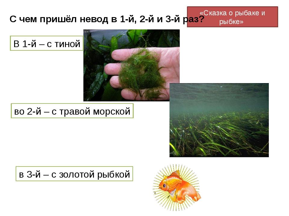«Сказка о рыбаке и рыбке» С чем пришёл невод в 1-й, 2-й и 3-й раз? В 1-й – с...