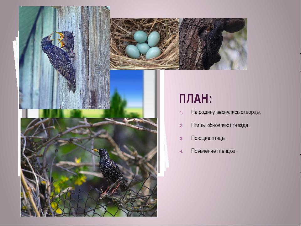 ПЛАН: На родину вернулись скворцы. Птицы обновляют гнезда. Поющие птицы. Появ...