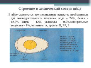 Строение и химический состав яйца В яйце содержатся все питательные вещества