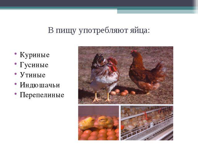 В пищу употребляют яйца: Куриные Гусиные Утиные Индюшачьи Перепелиные