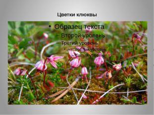 Цветки клюквы