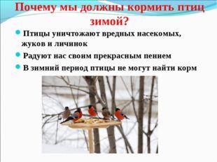 Почему мы должны кормить птиц зимой? Птицы уничтожают вредных насекомых, жуко