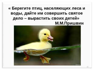 « Берегите птиц, населяющих леса и воды, дайте им совершить святое дело – вы
