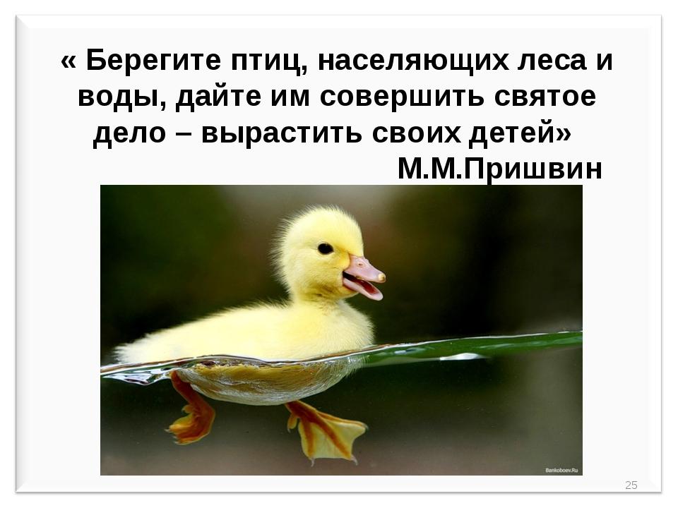 « Берегите птиц, населяющих леса и воды, дайте им совершить святое дело – вы...