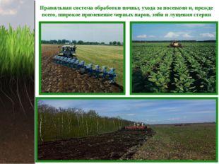 Правильная система обработки почвы, ухода за посевами и, прежде всего, широко