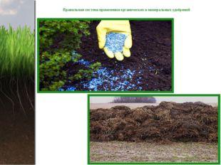 Правильная система применения органических и минеральных удобрений