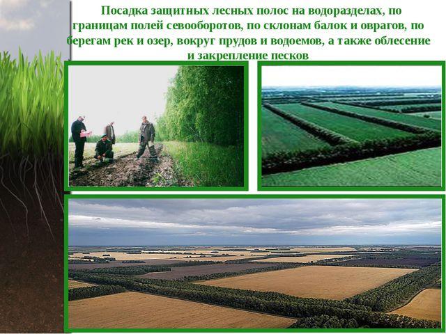 Посадка защитных лесных полос на водоразделах, по границам полей севооборото...