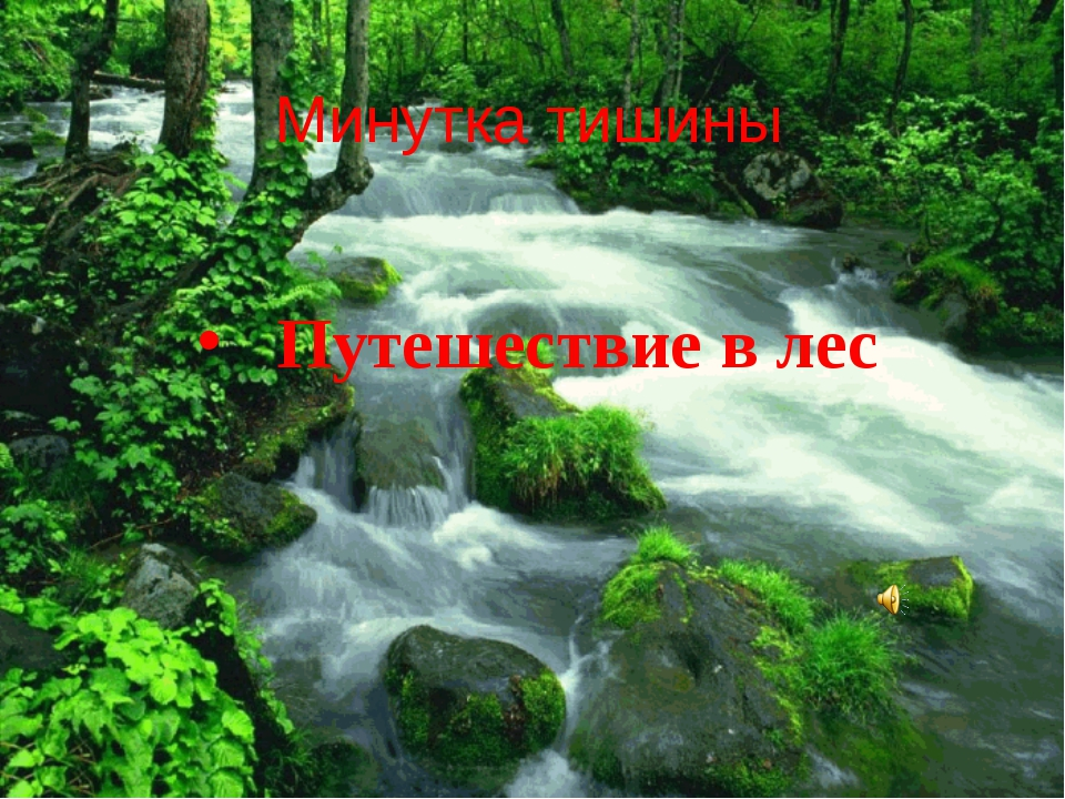 Минутка тишины Путешествие в лес