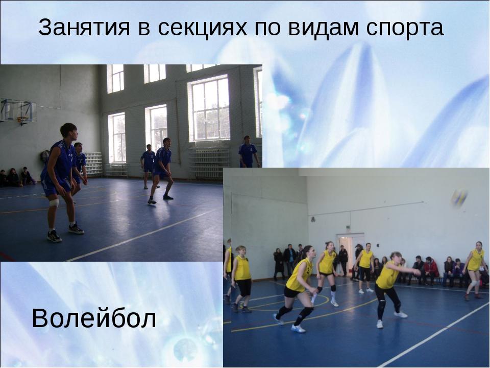Занятия в секциях по видам спорта Волейбол