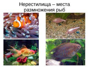Нерестилища – места размножения рыб