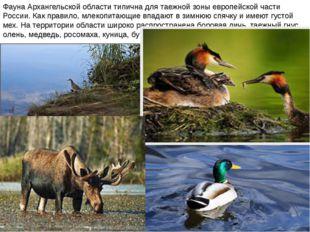 Фауна Архангельской области типична для таежной зоны европейской части России