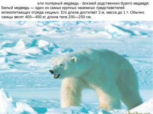 Бе́лый медве́дь или полярный медведь - близкий родственник бурого медведя. Бе