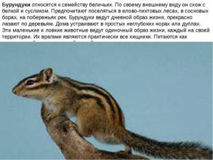 Бурундуки относятся к семейству беличьих. По своему внешнему виду он схож с б