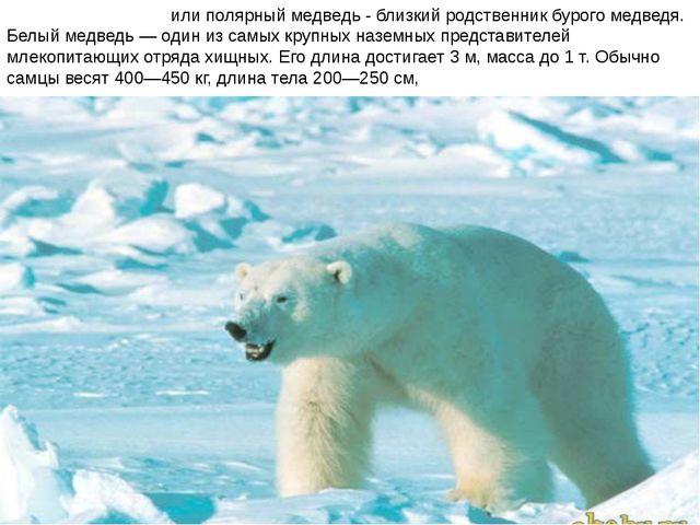 Бе́лый медве́дь или полярный медведь - близкий родственник бурого медведя. Бе...