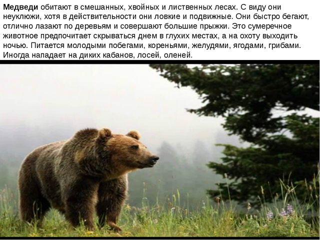 Медведи обитают в смешанных, хвойных и лиственных лесах. С виду они неуклюжи,...