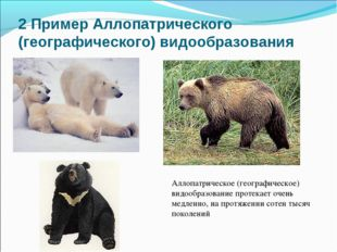 2 Пример Аллопатрического (географического) видообразования Аллопатрическое (