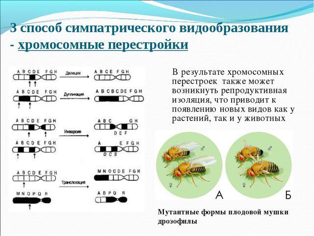 3 способ симпатрического видообразования - хромосомные перестройки В результа...