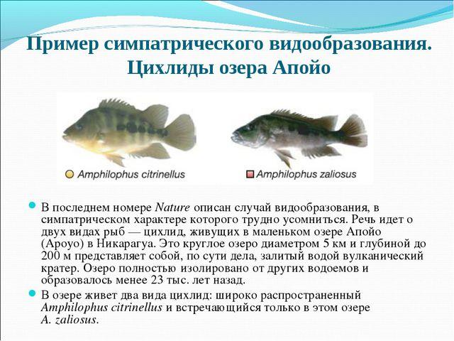 Пример симпатрического видообразования. Цихлиды озера Апойо В последнем номер...