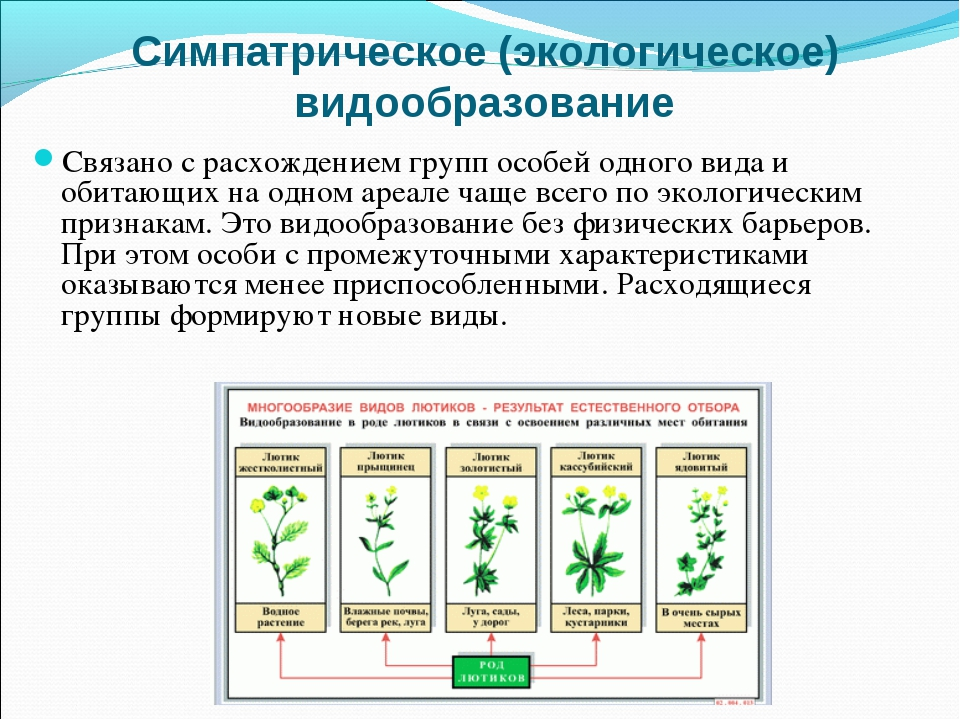 Экологическое видообразование с чем связано