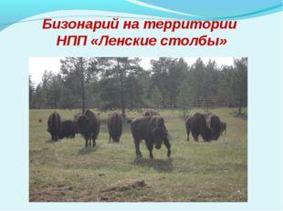 Бизонарий на территории НПП «Ленские столбы»
