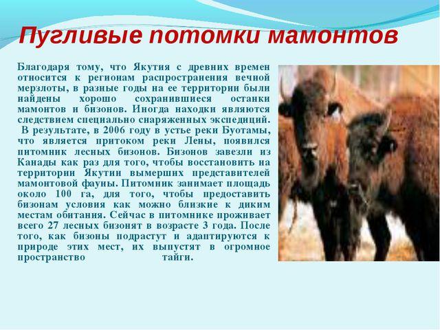 Пугливые потомки мамонтов Благодаря тому, что Якутия с древних времен относи...