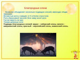 Название объединяет несколько подвидов оленей, имеющих общие признаки : Ветв
