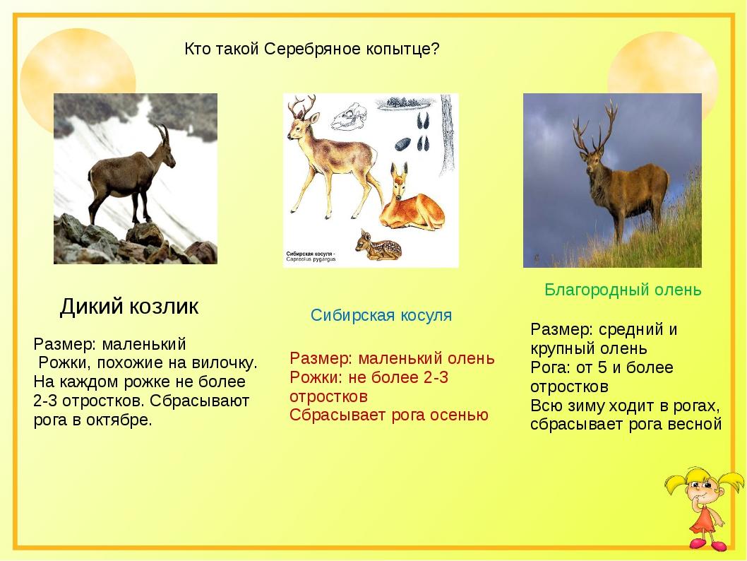 Кто такой Серебряное копытце? Сибирская косуля Благородный олень Размер: сред...