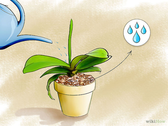 Care for Orchids Step 11.jpg