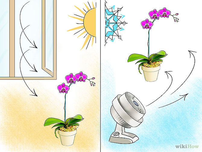 Care for Orchids Step 17.jpg