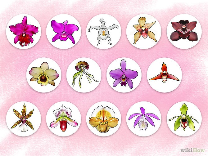 Care for Orchids Step 18.jpg
