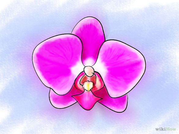 Care for Orchids Step 3Bullet1.jpg