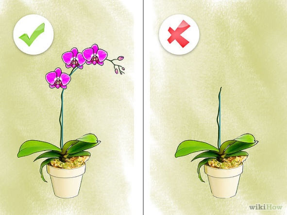Care for Orchids Step 2.jpg