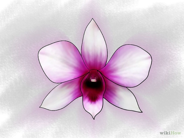 Care for Orchids Step 3Bullet3.jpg