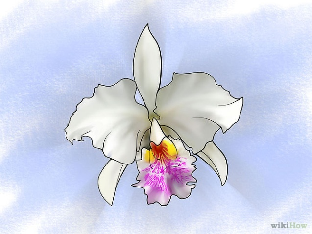 Care for Orchids Step 3Bullet2.jpg