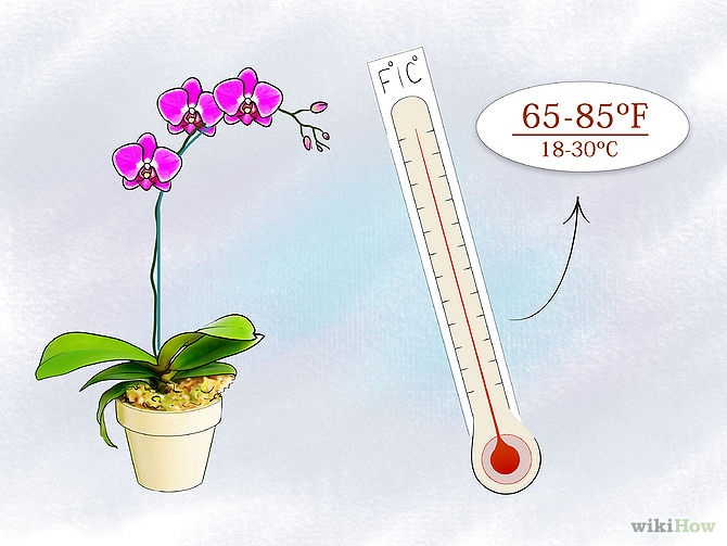 Care for Orchids Step 16.jpg