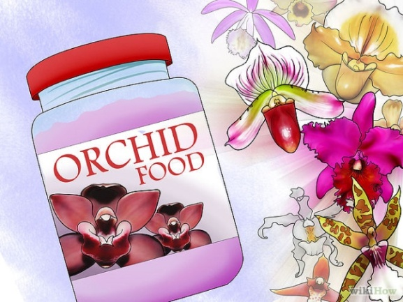 Care for Orchids Step 6 Version 2.jpg